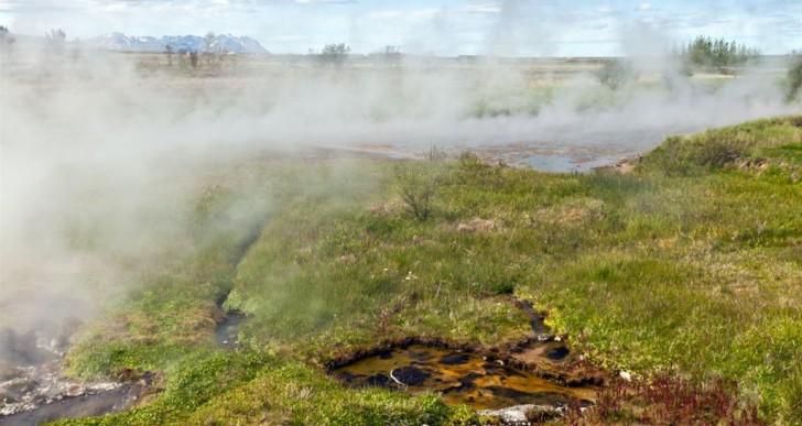 Inwazja roślin na Islandii