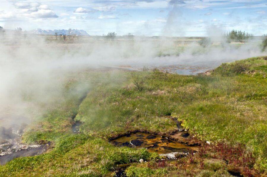 Inwazja-roslin-na-Islandii