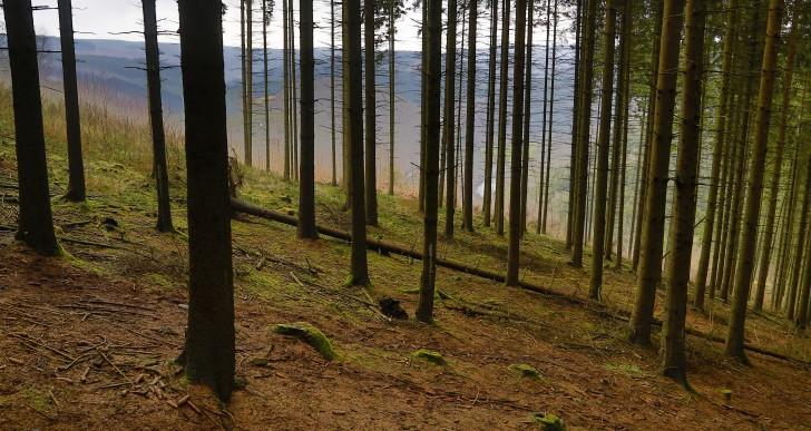 Zwiększanie lesistości Islandii