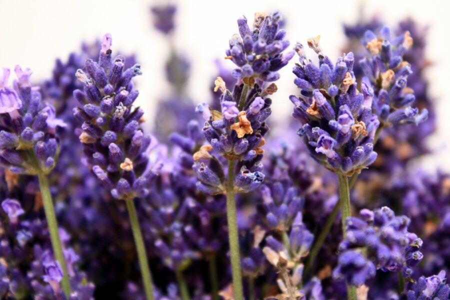 Czy-mozna-leczyc-zapachami