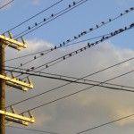 Sieci-energetyczne-problemem-dla-rozwoju-odnawialnych-zrodel-energii